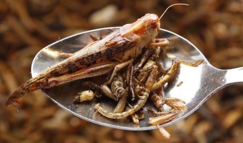 insectos para picar